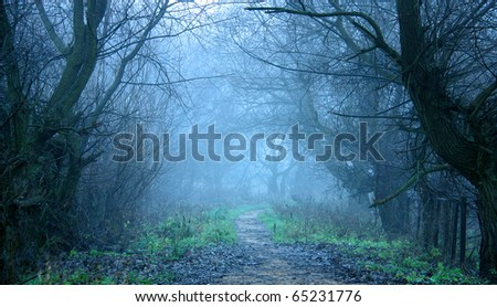 Cold autumn mist - stock photo