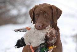Cold Duck Hunting