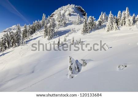 Cold environment landscape