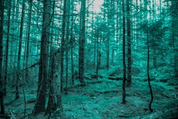 Cold forest (wood), turquoise colors. Misty Halloween background.