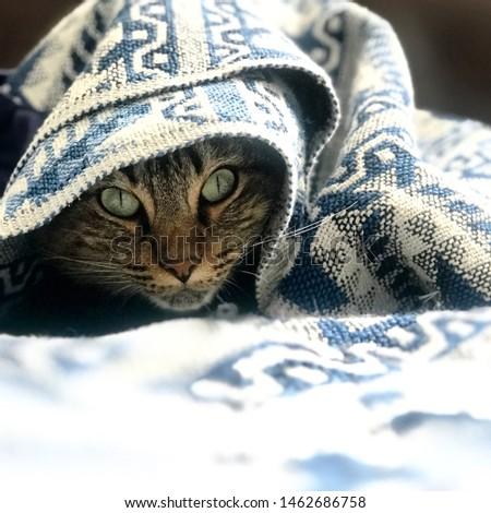 Cold Kitty Cat Feline Roxy Blanket #1462686758