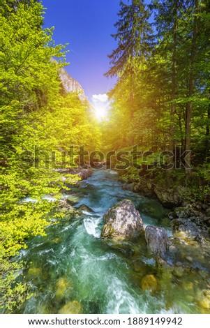 Cold mountain stream coming from Savica waterfall, river Sava near lake Bohinj, Slovenian Alps, Slovenia. The Sava Bohinjka is a headwater of the Sava River in northwestern Slovenia. Stok fotoğraf ©