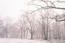 cold winter city park in mist with snow covered tree trunks - vintage old look