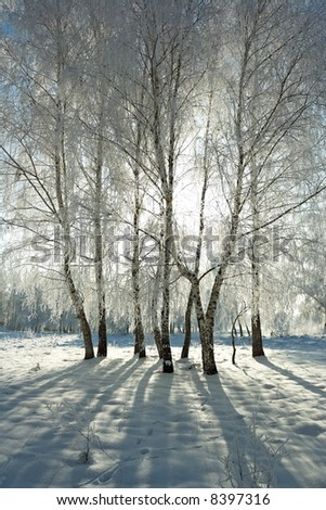 Cold winter day, beautiful hoarfrost and rime on trees - stock photo