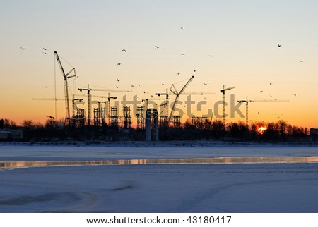Cold   winter sunrise  with cranes and gulls