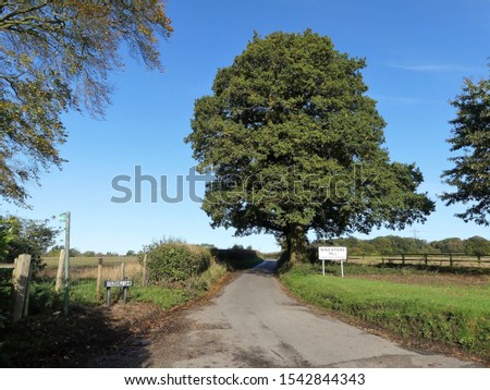 Coleshill Lane leading to the Buckinghamshire village of Winchmore Hill. Winchmore Hill is small hamlet located in the beautiful Chiltern Hills. #1542844343