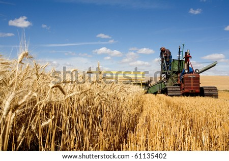 COLFAX, WASHINGTON-SEPT 6: Unidentified farmer harvests wheat using an old combine on September 6, 2010 in Colfax. The threshing bee uses old machines and Draft horses and attracts crowds.