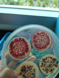 coliform bacteria in R2A agar