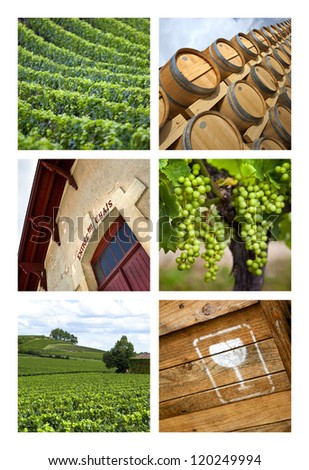 Collage about wine and viticulture
