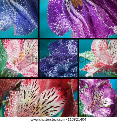 Collage, beautiful flowers in water, macro