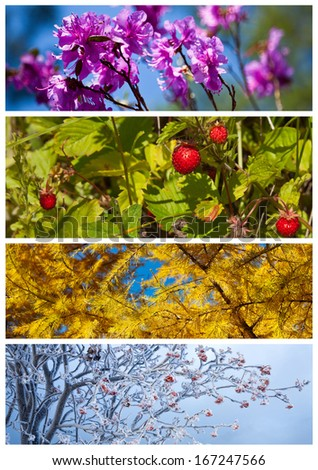 Collage. Bright floral backgrounds. Four seasons. Calendar