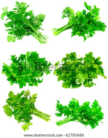 Collage (collection ) of Fresh parsley on white background. Isolated over white