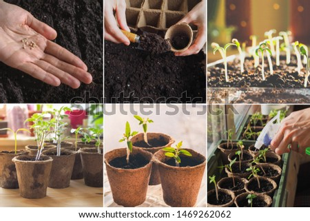 Collage from different pictures of planting seeds in the spring.