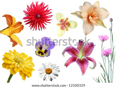 Collage from  flowers on a white background.