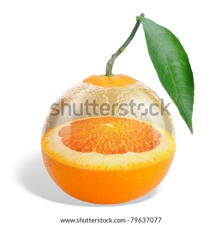 Collage. Glass orange - an orange tree growing within the orange isolated on white
