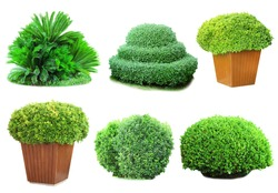 Collage green bushes isolated on white