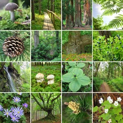 collage - in the forest. scenic woodland plants, flowers and trees.