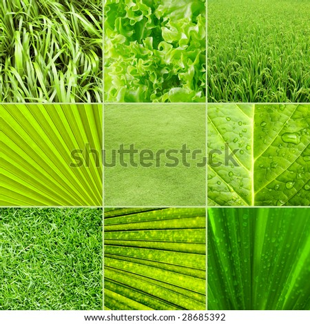 Collage nature green background. All image belongs to me.