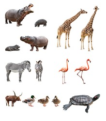 Collage of african animals in front of white background