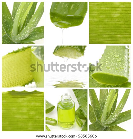 Collage of aloe leaf and juice droplet