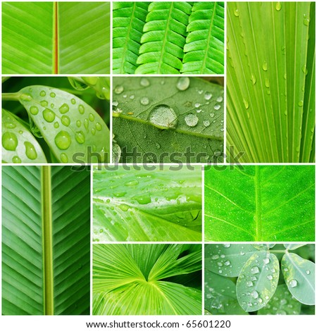 Collage of beautiful plant leaves depicting nature