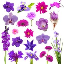 Collage of beautiful purple flowers