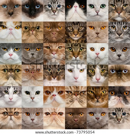 Collage of 36 cat heads #73795054