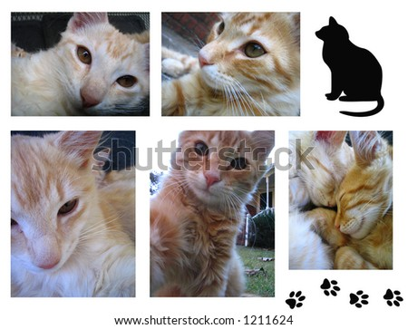 Collage Of Cat Photos And Illustrations