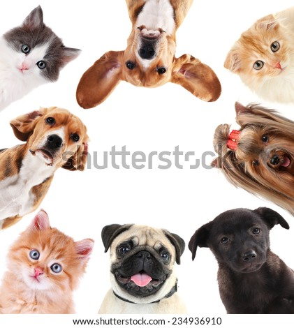 Shutterstock Collage of cute pets isolated on white