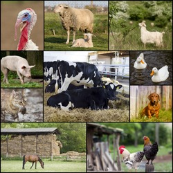 Collage of different domestic animals on the farm