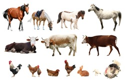 Collage of different farm animals on white background