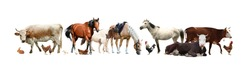 Collage of different farm animals on white background. Banner design