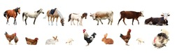 Collage of different farm animals on white background. Banner design