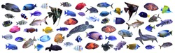 Collage of different tropical fishes on white background