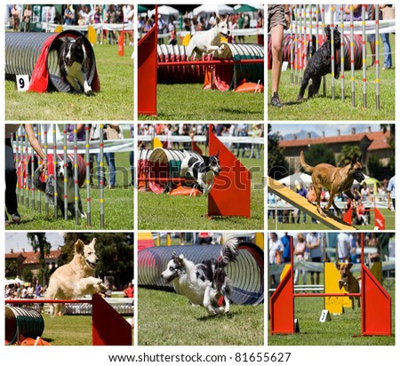 Collage of dogs in agility