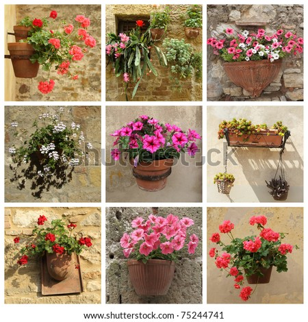 collage of flowers in pots, Tuscany - stock photo