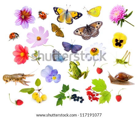 Collage of flowers, insects and animals. white