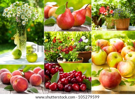 collage of garden summer flowers and fruits