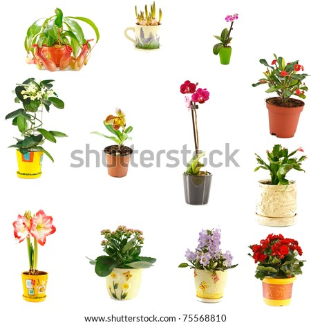 collage of indoor plants of different varieties