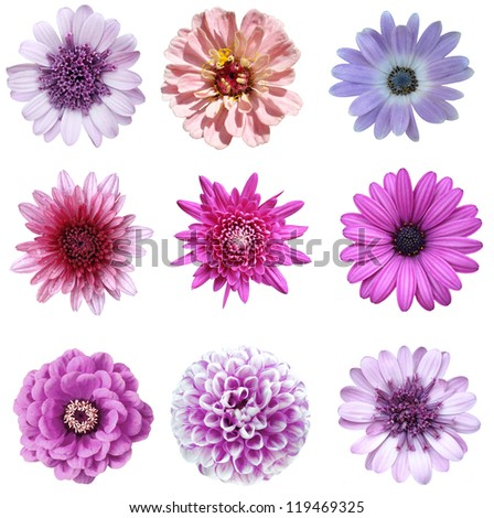 collage of isolated violet flowers