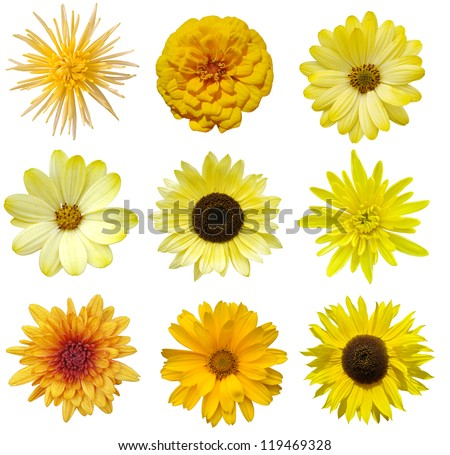Collage of isolated yellow flowers