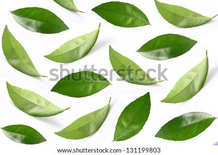 Collage of leaves