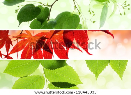 Collage of natural seasonal banners with leaves