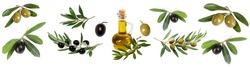 collage of olives, olive branches, olive oil bottle on a white background isolated