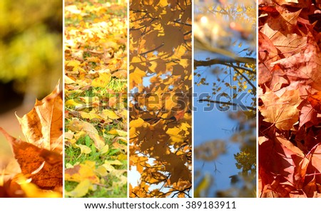 Collage of photos of autumn theme, leaves, dirt road, pool - Shutterstock ID 389183911