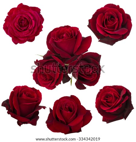 collage of red roses isolated on white background