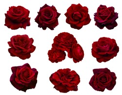 collage of red ten roses isolated on white background