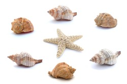 Collage of seashells and starfish isolated on white background.