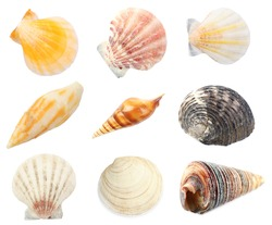 Collage of shells isolated on white