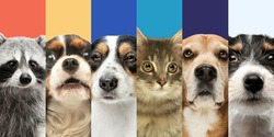 Collage of six different animals dogs, cat and raccoon. Close-up portraits.